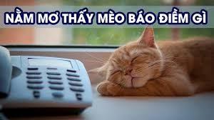 Con số may mắn khi mơ thấy con mèo