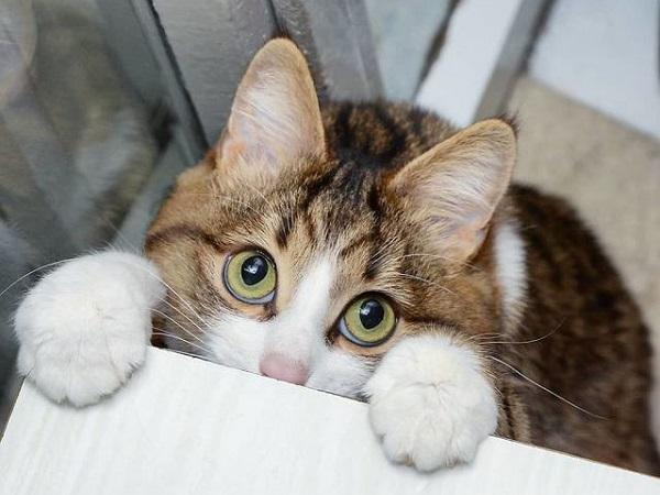Mơ thấy mèo bị tật là điềm báo gì, đánh con nào để trúng?