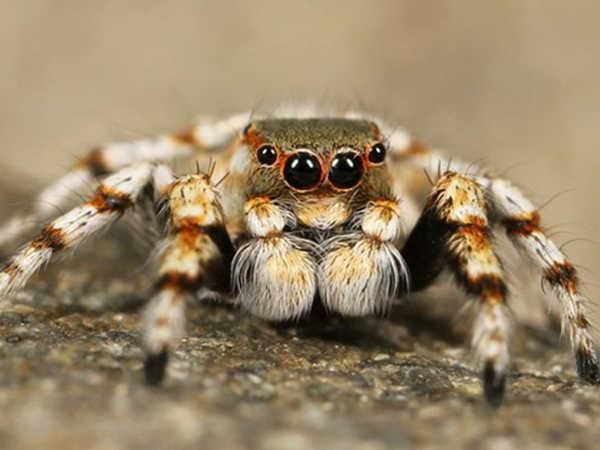 Mơ thấy nhện là điềm dữ hay lành, đánh con lô nào dễ trúng?